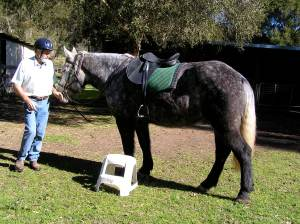 Paul and Ellie, showing type of saddle used.