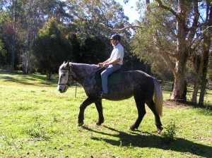Ellie demonstrating the versatility of a draught mare; ridden as well as driven